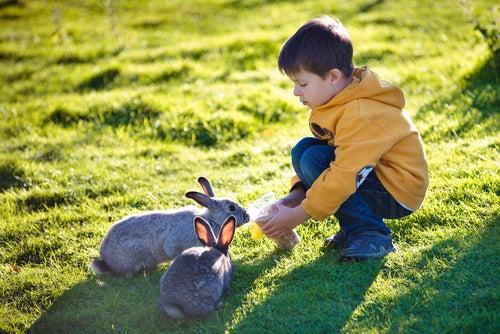 Un enfant joue dans l'herbe avec deux lapins