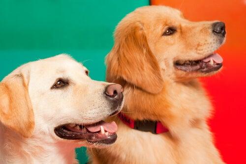 Deux chiens se tiennent l'un près de l'autre