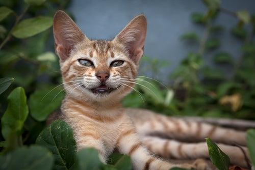 un chat allongé sourit