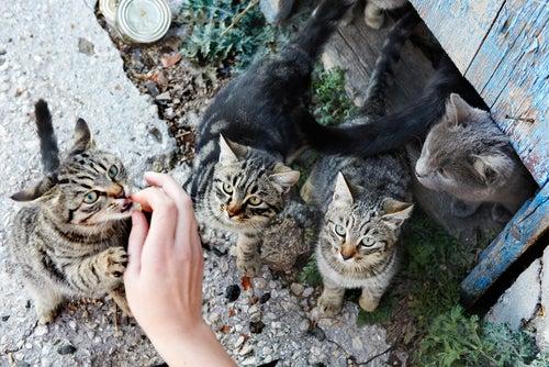 un groupe de chat nourris