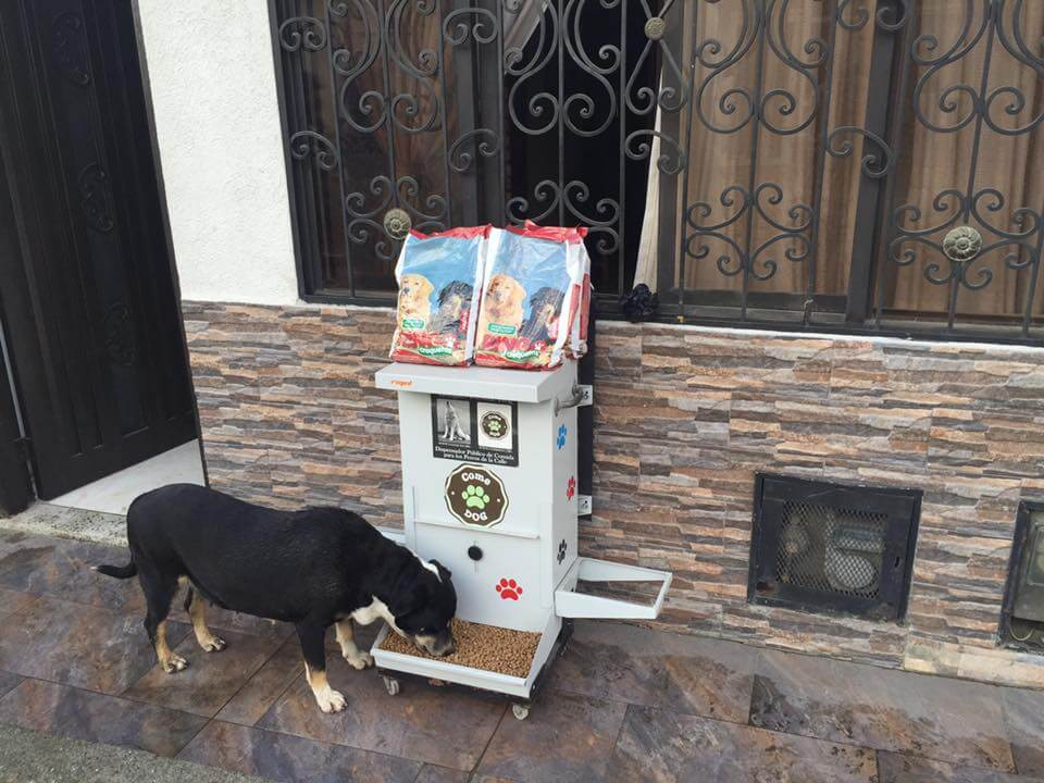 un chien errant mange au distributeur