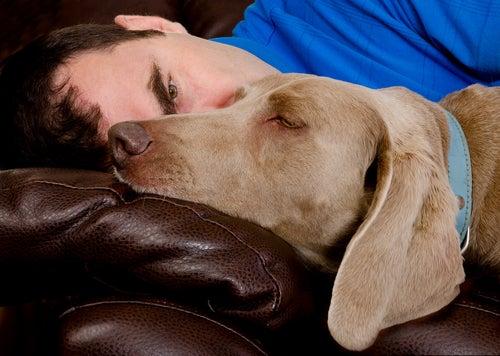 un chien allongé sur un canapé avec son maître