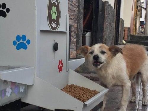 6000 chiens ont bénéficié du distributeur de nourriture ComeDog