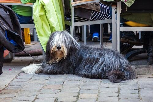 un chien allongé tenu en laisse
