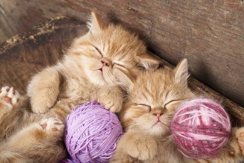 Deux chatons roux dorment avec de petites pelotes de laines entre leurs pattes