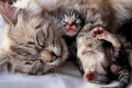 Comment séparer des chatons de leur mère ?