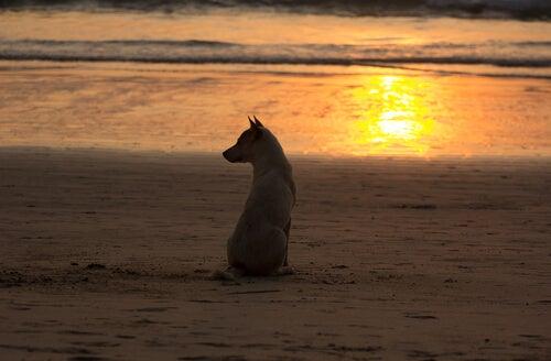 Un chien assis sur la plage au coucher du soleil