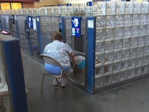 Une dame lit des livres à des chiens d'un refuge pour qu'ils ne se sentent pas seuls