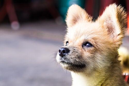 chien qui regarde en hauteur