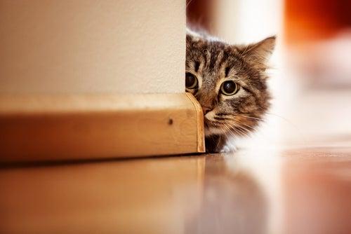 chat craintif caché derrière le recoin d'un mur