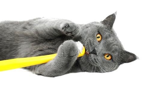 Un chat gris joue avec une brosse à dents jaune