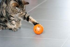 chat qui joue à la balle