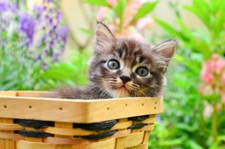 Quelques conseils avant d'adopter un chat