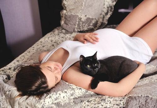 Chats et grossesse : est-ce vraiment incompatible ?