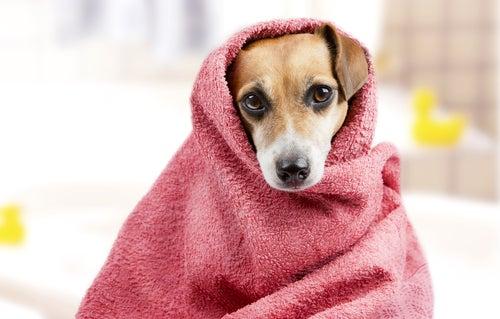 Préparez votre chien pour le bain : comment lui enlever sa peur et ce dont vous avez besoin
