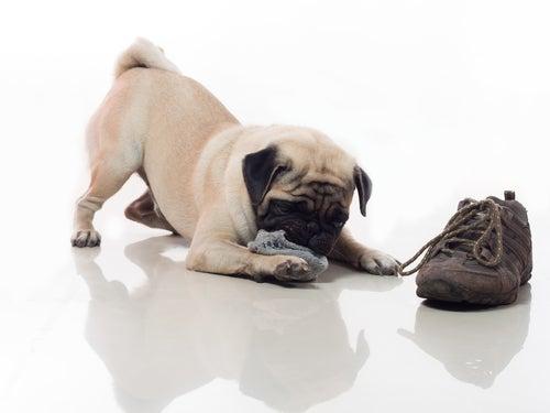 5 conseils pour que votre chien ne détruise rien chez vous