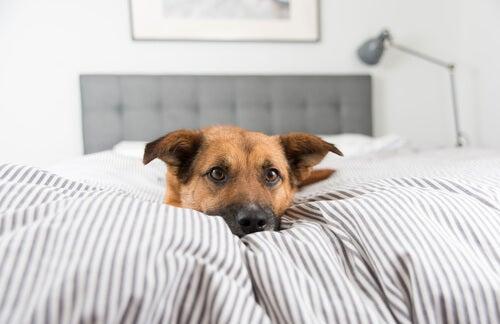 un chien allongé sur les chiens