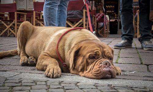 Les chiens et la notion du temps