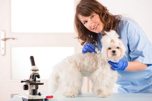 Transfusions sanguines chez les animaux de compagnie