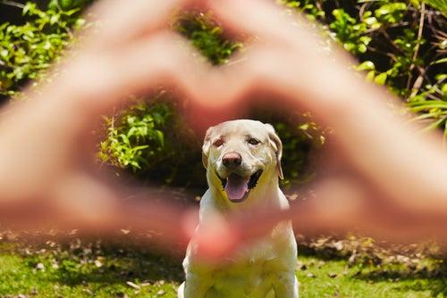 L'importance du régime alimentaire pour le cœur des chiens