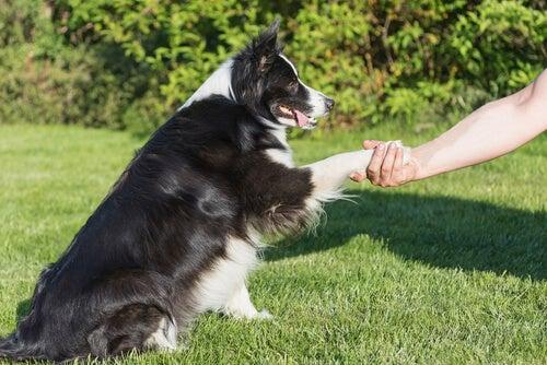 Un chien met sa patte dans la main de son propriétaire pour faire la paix
