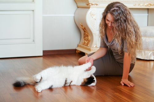 un chaton joue avec une femme