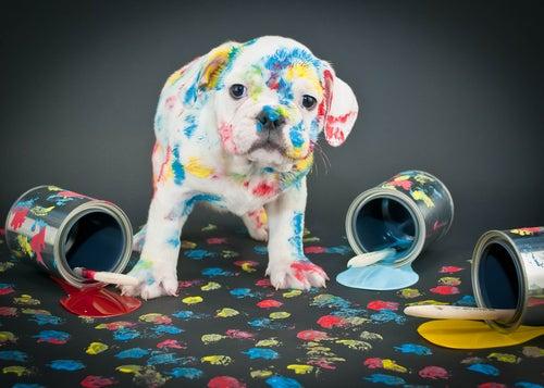 6 raisons d'éduquer votre chien correctement
