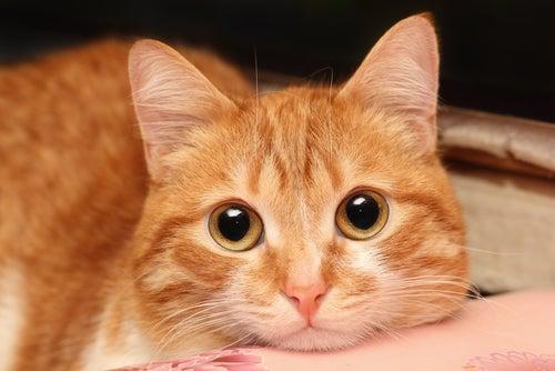 Comment puis-je savoir si mon chat est malade ?