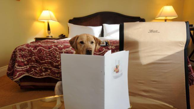 un chien dans une chambre d'hôtel devant un menu