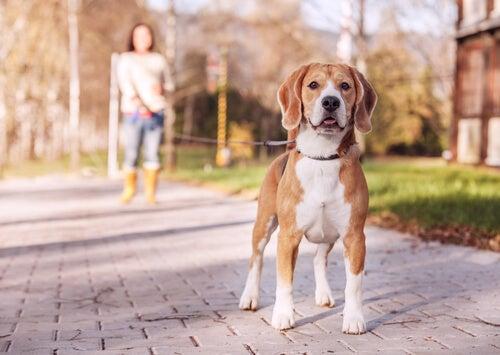 chien promené en laisse par sa maitresse