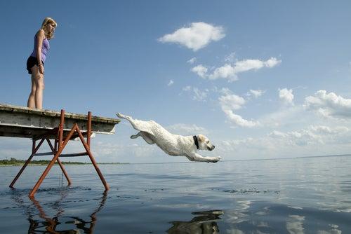 un chien se jette dans la mer