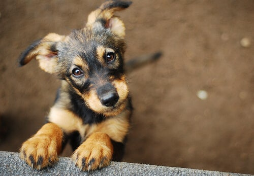 petit chien qui regarde en l'air