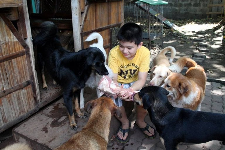 Ken nourrit un groupe de chiens
