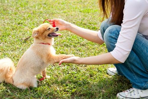petit chien qui donne la patte à sa maitresse