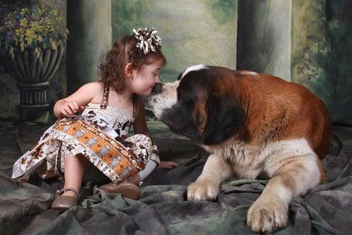 Un Saint-Bernard et une petite fille