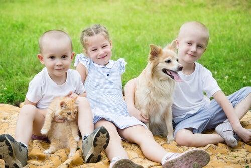 trois enfants, un chien et un chat en extérieur