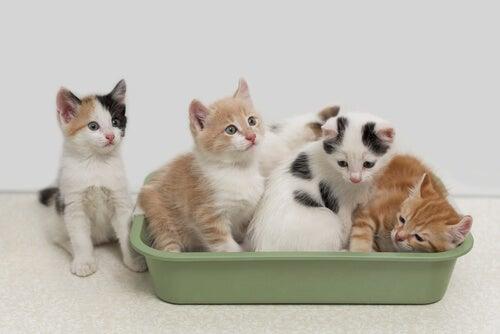 cinq chatons jouent dans un bac