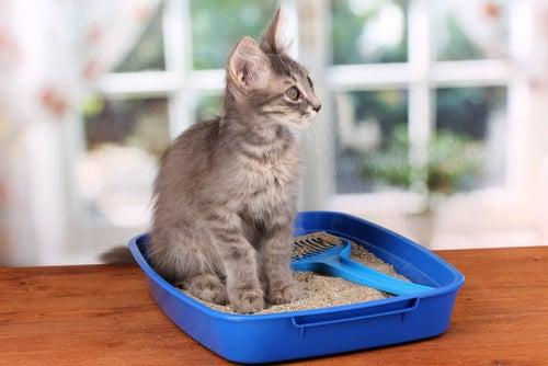 un jeune chat dans sa litière