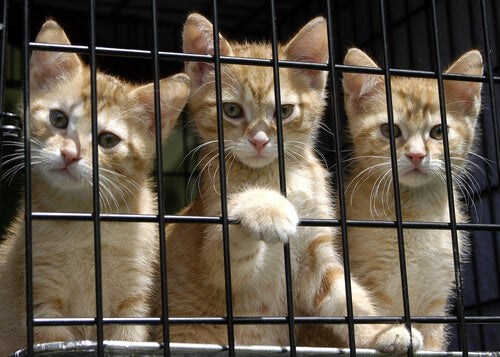 three kittens in a cage