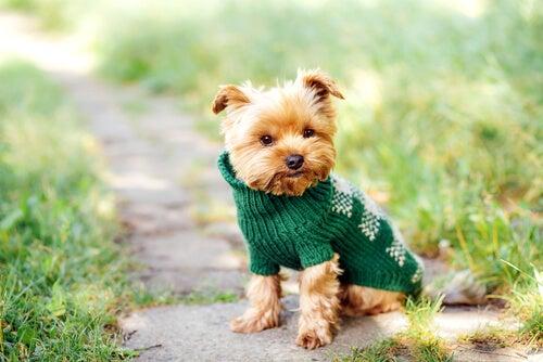 Les noms pour les petits chiens