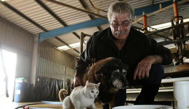La chienne Maggie , son maître et un chat