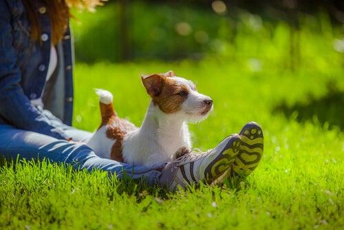 un petit chien avec une femme, allongé dans l'herbe