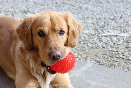 4 jouets faits maison que les chiens adorent