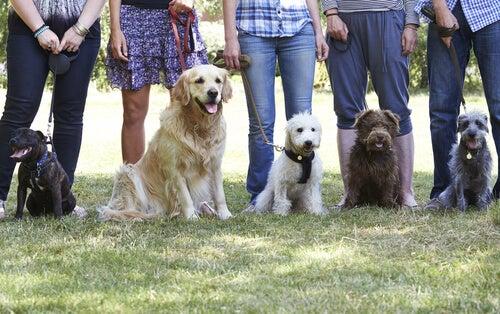un groupe de chiens de différentes races sont assis, en laisse, avec leurs maîtres