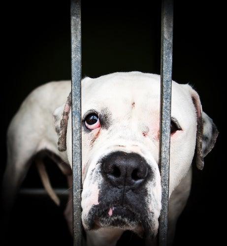 un chien l'air malheureux derrière des barreaux