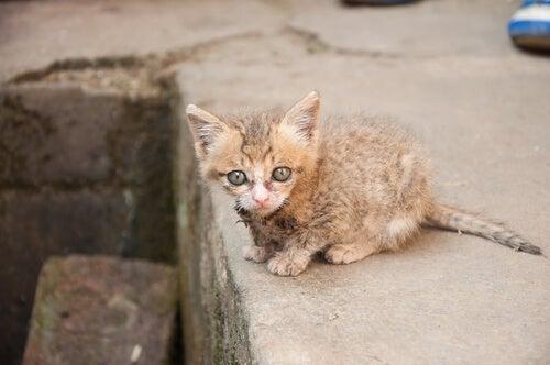 un tout petit chat errant dans la rue
