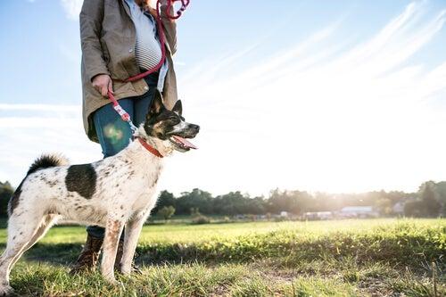 un chien en laisse avec une femme, en extérieur