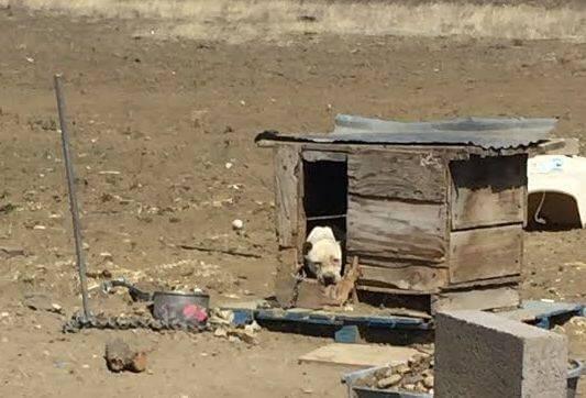 Violet séquestré dans une case abandonnée