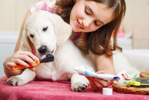 une femme brosse les dents d'un chien