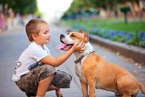 enfant à genoux qui caresse son chien